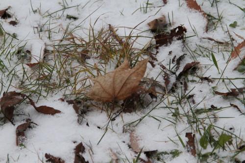 裏磐梯風景写真   【雪が降ってきた、ほんの少しだけど・・】